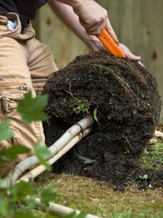 How to Plant a Tree! Best tip - To encourage deep root growth it is a good idea to bury a piece of pvc pipe with the tree to the depth of the root ball. Water can be slow dripped in this pipe it will cause the tree to send down deep roots and not send up damaging surface roots.