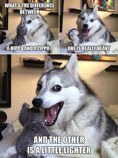 Pun Dog (The Best Of)