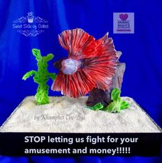 Betta Splendens Rights Collaboration - Cake by Sweet Side of Cakes by Khamphet Gravity Defying Cake, Edible Art, Betta Fish, Animal Rights, Daily Inspiration, Collaboration, Cake Decorating, Cakes, Sweet
