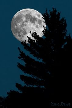 Caught by Nella Pascal : This shot is not a montage, it's a real close up of a tree at moon rise.