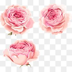 Hand-painted beautiful pink peony flowers PNG and Clipart Art Floral, Flower Graphic, Free Watercolor Flowers, Watercolor Pattern, Pink Peonies, Pink Flowers, Painted Flowers, Peony Flower, Flower Art