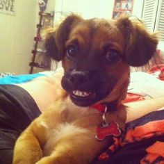 This awkwardly adorable smile that melts hearts at a moment's notice. | The 40 Most Awkward Dogs Of 2013