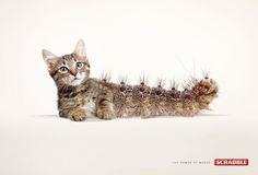 Scrabble words 3 Cat-erpillar