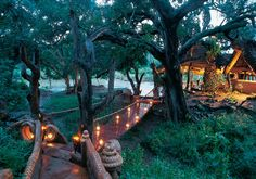 Makalali Private Game Reserve, in Limpopo Province, South Africa South African Weddings, Long Way Home, Private Games, Game Reserve, Safari, Wedding Venues, To Go, Resort, Gallery