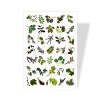 Tree Leaves Poster |Science Poster for Kids | Eco friendly Nature Poster