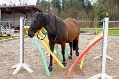 Bildergebnis für agility pferd