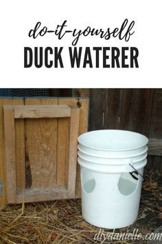 Wondering how to keep muck out of the duck water? Here's our simple solution: A no mess duck waterer. Backyard Ducks, Backyard Farming, Chickens Backyard, Raising Ducks, Raising Chickens, How To Raise Ducks, Raising Farm Animals, Duck Waterer, Duck Pens