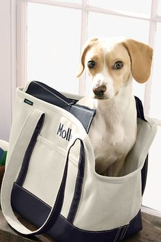 Tote bag for pets from Lands End $50