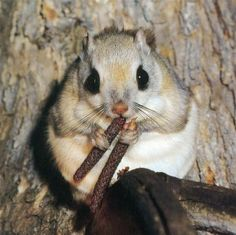 squirrel eating a... stick?