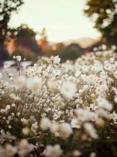 Find images and videos about grunge, nature and flowers on We Heart It - the app to get lost in what you love. Pretty Flowers, Wild Flowers, Field Of Flowers, Nature Pictures Flowers, Autumn Flowers, Daisy Flowers, Belle Photo, Pretty Pictures, Spring Pictures