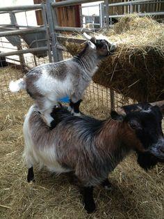 Cute Baby Animals: Selected Photos of Cute Baby Animals - StumbleUpon