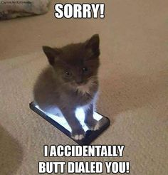 This kitten has the cell phone mastered, but not the way you think.