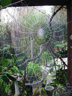 on my deck early morning spider web waiting