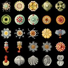 Fantastic selection of high-res transparency .png files of images from the work of Ernst Haeckel