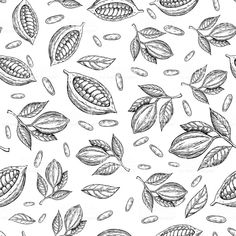 Find Cocoa Branch Vector Seamless Pattern Superfood stock images in HD and millions of other royalty-free stock photos, illustrations and vectors in the Shutterstock collection. Acorn Drawing, Plant Drawing, Flower Bouquet Drawing, Cacao Fruit, Cocoa, Minimal Drawings, Branch Vector, Le Cacao, Drawing Frames