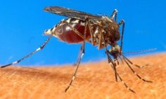Super lek protiv ujeda komarca - 24sata.rs
