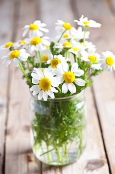 What My Mom And Daisies In A Jelly Jar Taught Me About Life - GardenBunch