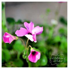 Gioco di sca...tti Rose, Garden, Flowers, Plants, Pink, Garten, Florals, Gardens, Roses