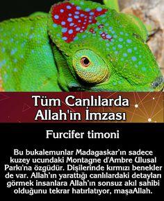 Allah, Website, Animals, Animales, Animaux, Animal, Animais