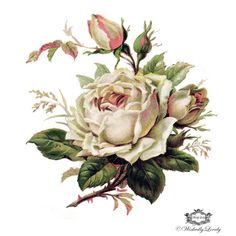 Delicate palest pink rose,  Vintage, floral tattoo, Body Art, Wickedly Lovely Skin Art Temporary Tattoo