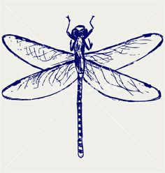 Dragonfly vector 955444 - by kreatiw on VectorStock®