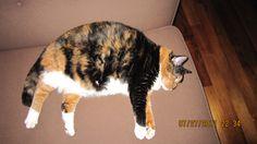 """My fat cat Phantom """"fanny fan"""""""