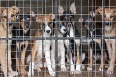 Shelter dogs being euthanized despite having owners linedup