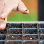 Δημιουργία σπορείου για φθινοπωρινά κηπευτικά Gardening, Lawn And Garden, Horticulture