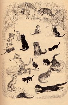 The House of Thirty Cats by my vintage book collection (in blog form), via Flickr