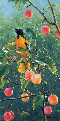 Marc Hanson - Oriole in the Orchard