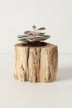 Make a planter out of a tree trunk
