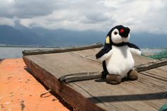 On the Erhai lake. Belgium, Penguins, China, Animals, Animales, Animaux, Penguin, Animal, Animais