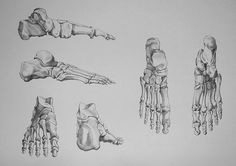 Drawing Human Anatomy Foot Bones - Video Lesson presented in the Drawing Academy Course Bone Drawing, Feet Drawing, Human Skeleton Anatomy, Human Anatomy Drawing, Foot Anatomy, Anatomy Art, Os Main, Anatomy Images, Skeleton Drawings