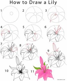 Flower Drawing | Cool2bKids
