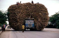 Africa | A truck transports stubbles of corn for animals in Mogadishu. | © Pascal Maitre