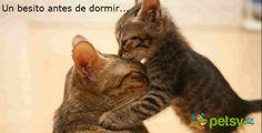 Un beso de buenos días, buenas tardes y buenas noches siempre es bienvenido <3