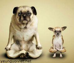 """Résultat de recherche d'images pour """"chien donne la patte vue de face"""""""