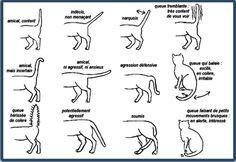 Mieux comprendre son chat. chat-mouvements-queue