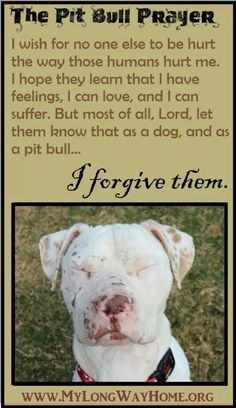 This makes me cry to even read this kind of stuff. So very sad. Please stand up for this breed.