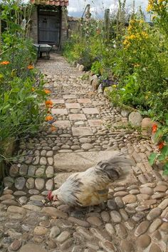 Rock garden path and a gorgeous chicken.