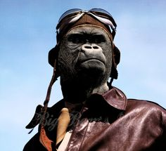 Aviator Gorilla, badass art print, photographic collage, aviation, anthropomorphic, 8.5 x 11 print
