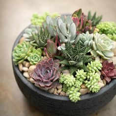 West coast gardens на доске desk plant ideas for the office Succulents In Containers, Cacti And Succulents, Planting Succulents, Cactus Plants, Garden Plants, Indoor Plants, Succulent Gardening, Succulent Terrarium, Container Gardening