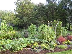 How to make a beautiful edible garden.