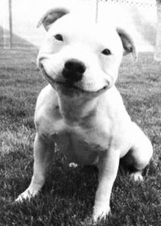 hello, yes this is dog.  I mean, try not to smile at this. @Lauren S. Taylor and anyone else with a soul.