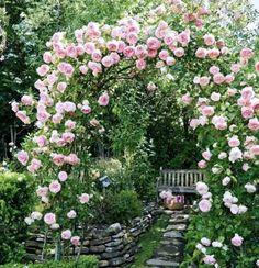 Плетистая роза - правильный уход: 35 садовых арок из роз