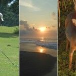 Sun, Clouds, Golf & Animals Part of Tadpole & Polly Wogg's Vacation