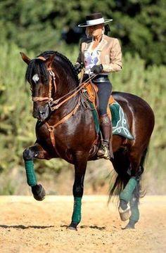 Horse, Mijas, Andalusia, Spain.