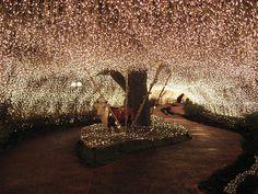 Fairy Lights / Jason Morley Twinkle Lights, Twinkle Twinkle, String Lights, Wedding Reception, Wedding Venues, Wedding Walkway, Wedding Chairs, Wedding Locations, Garden Wedding