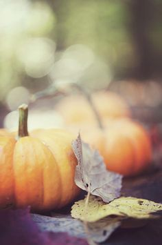 ♀ Bokeh photography autumn pumpkin