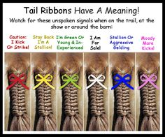 Did you know? Back in the day, equestrians often didn't have time to greet and speak with all the other riders before a foxhunt... so they put ribbons in their horses' tails to communicate what...